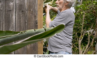 Active senior man removing a nail from a broken fence with a...