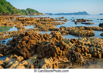 coral rock around beach during ebb tide and morning light...