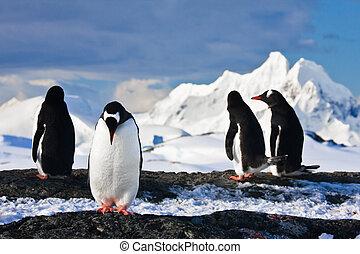 Pingüinos, roca, antártida