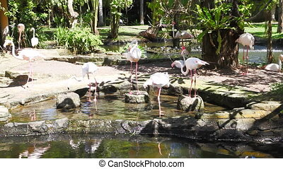 Herons - Tropical Birds , Bali