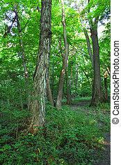 Forest Scenery - Shabbona, Illinois