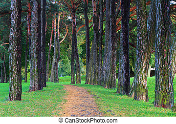 Summer scene theme - Summer scene. Path in pine forest in...