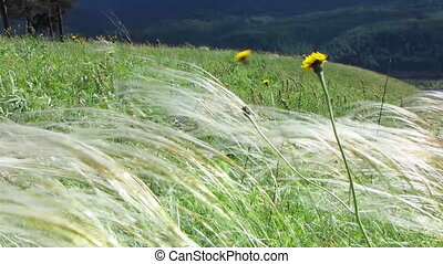 Nature - landscape 7 - Wind in high grass with glowing...