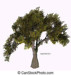 English Oak Tree - The Oak tree comes in 600 different...