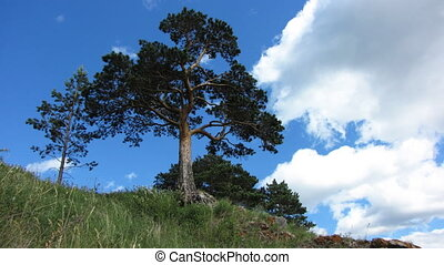 Nature - landscape 4 - Pine on a background of the...