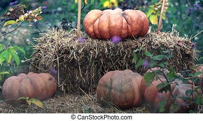 Halloween Pumpkins With Fog - Halloween Pumpkins And...