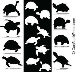 tortue, noir, blanc, vecteur