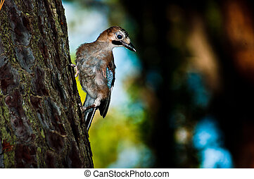 Close up of a bird sitting on pine tree bark Punta...