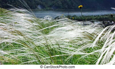 Nature - landscape 6 - Wind in high grass with glowing...