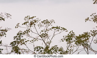 plant on background of sky