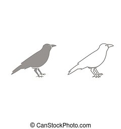 Crow grey set icon . - Crow it is grey set icon .