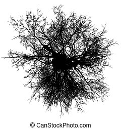 tree leafless top view silhouette isolated - black - vector...