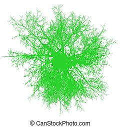 tree leafless top view silhouette isolated - green - vector...