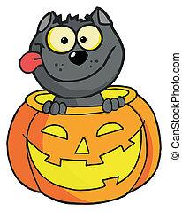 Halloween cat  - Happy Cat In A Pumpkin