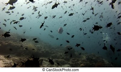 School of fish and tuna underwater on background of...