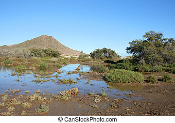 Nature in Spain - Spanish landscape. Mangrove plants in Cabo...