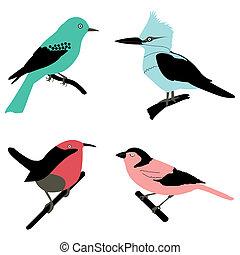 different birds