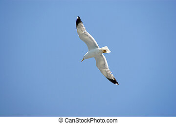 Sea Bird on Blue Sky