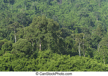 Khao Yai National Park, Tropical forest, Thailand