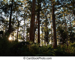 Forest at dusk - Trees receiving the last light of the day