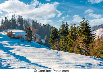 spruce trees on a snowy mountain slope. beautiful winter...