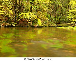 Autumn colorful forest above mountain river. Water under...