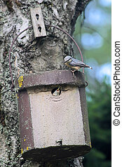 Birdhouse with young bird