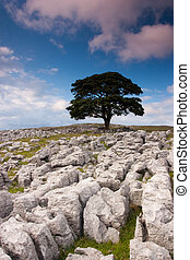 Tree standing alone in the rocks field