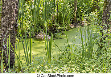 sunny wetland scenery in Southern Germany at early summer...