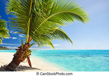 Small palm tree hanging over stunning lagoon - Small palm...
