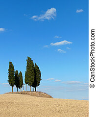 Tuscany landscape - Trees in a clay landscape in Tuscany,...