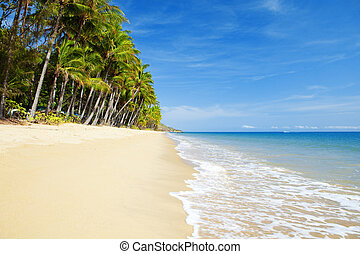 Deserted tropical beach with palm trees in north Queensland