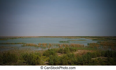Mesopotamian Marshes, habitat of Marsh Arabs aka Madans...