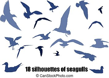 seagulls - several silhouettes of seagulls in various poses...