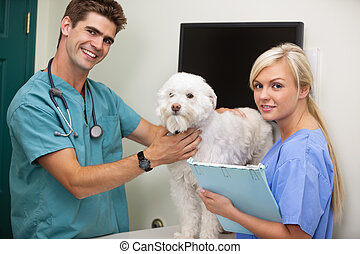 Vet with assistant examining dog - Portrait of vet with...