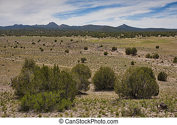 Landscape in Arizona - High desert scenery that is near...