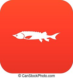 Fresh sturgeon fish icon digital red for any design isolated...