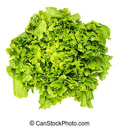 Escarole endive lettuce head from above over white -...
