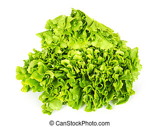 Escarole endive lettuce head front view over white -...
