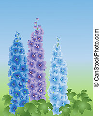 delphinium - an illustration of three delphinium flower...