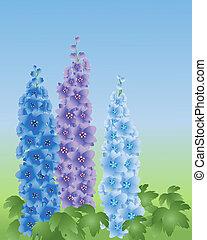 delphinium - an illustration of three delphinium flower...