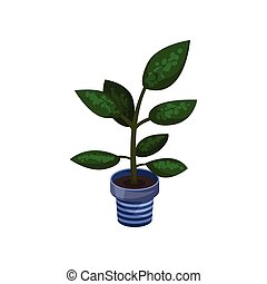Dieffenbachia houseplant, potted plant vector illustration...