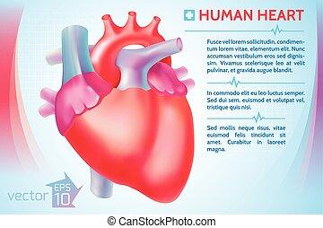 Medical Organ Poster - Medical organ poster with red human...