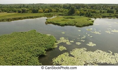 Aerial shot of green bulrush islets, small inflows at the...