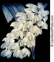 Botanical on black background.