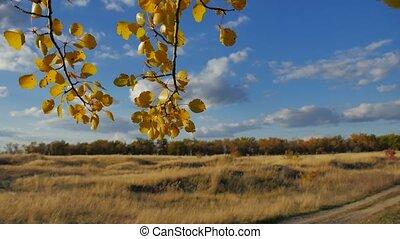 Yellow aspen sunlight leaves against forest the blue sky...