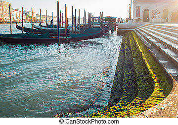 Gondolas on the pier near the shore, stage with seaweed in...
