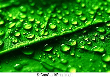waterdrops on green plant leaf macro