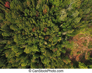 Aerial view of boreal forest evergreen trees