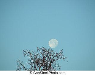 Winter Moon Over The Catalpa Tree